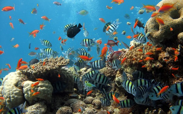"""Phú Quốc – hòn đảo """"Ngọc"""" – hòn đảo lớn nhất của Việt Nam này mang trong mình nét đẹp nguyên sơ, hiền hòa cùng bờ cát trắng mịn màng ôm lấy làn nước trong xanh. Ảnh: ST"""