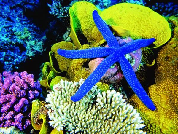 Một điểm thú vị mà nhất định bạn cần trải nghiệm khi tới nơi đây đó là lặn xuống biển ngắm nhìn rạn san hô sắc màu tuyệt đẹp. Ảnh: ST
