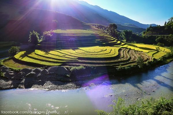 Những ruộng bậc thang lúa chín vàng rộm ở vùng núi phía Bắc. Ảnh: ST