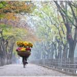 Du lịch Hà Nội vào mùa thu, bạn đừng quên ghé đường Kim Mã ngập lá vàng rơi. Ảnh: Ngô Dung