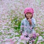 du lịch hoa tam giác mạch Hà Giang