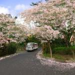 Điểm ngắm hoa xuân đẹp nhất Việt Nam