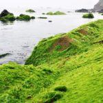 Du lịch Lý Sơn mùa rêu