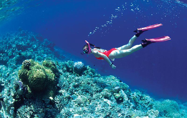 Lặn ngắm san hô ở Cô Tô
